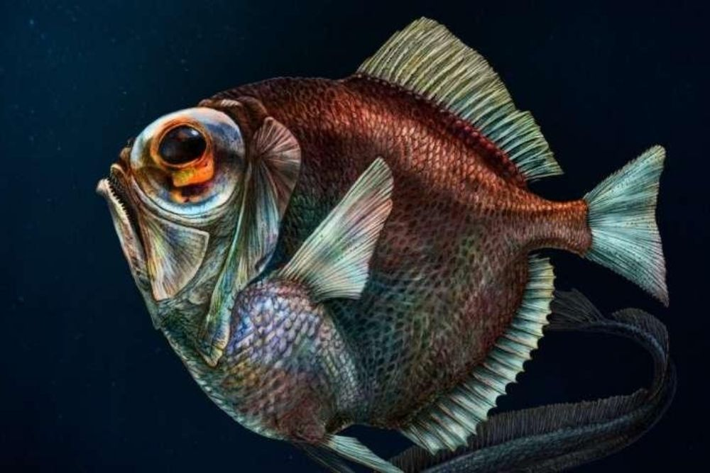 Deep-Sea Fishes Can See Colors in the Dark 1