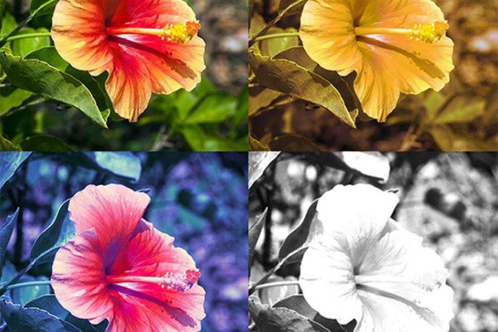 Understanding Color Blindness