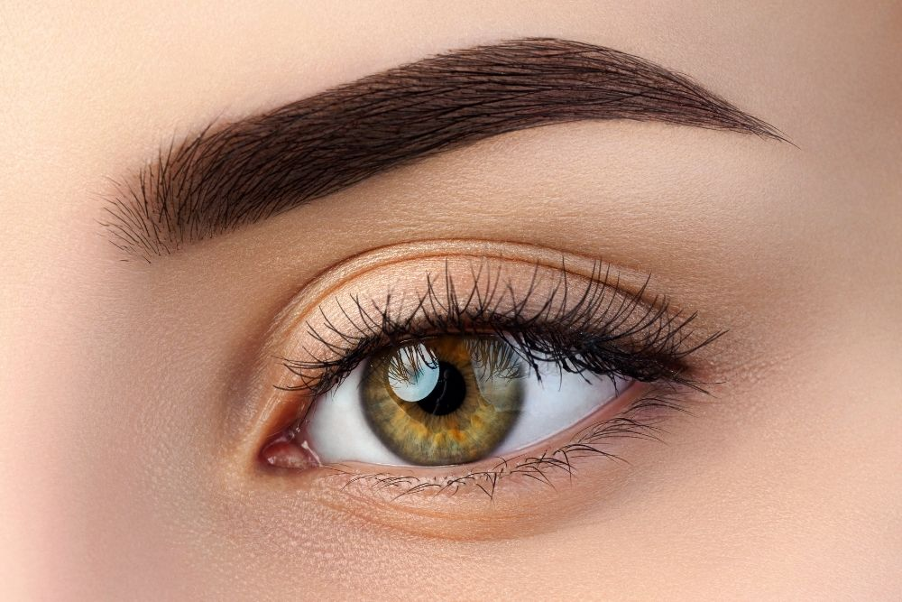 what is the purpose of eyebrows and eyelashes in humans